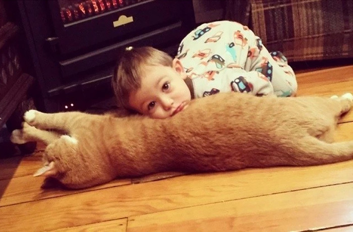 "Прежний хозяин устал от постоянных ""нападений"" Ларри на холодильник дружба, кот, мальчик"