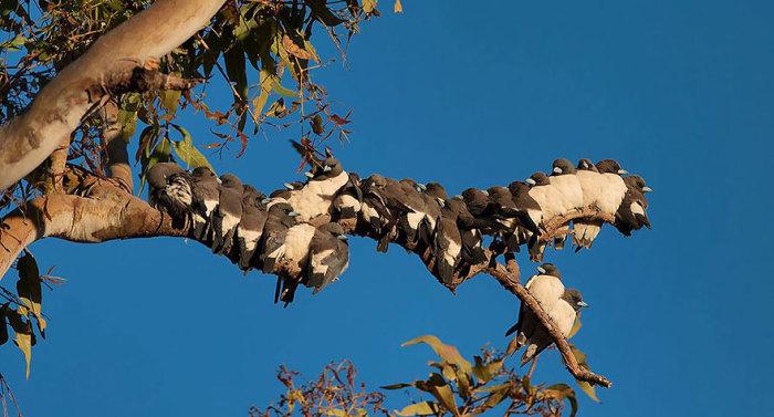 Птички, прижавшиеся друг к другу для тепла.