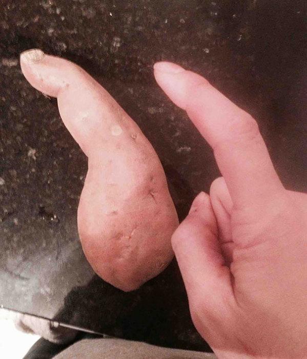 Картофель в форме пальца.