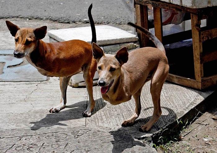 Собаки, родившиеся без передних лап, но всё равно не теряющие волю к жизни.