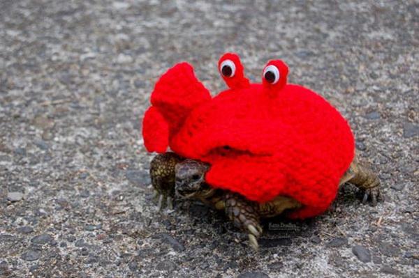 Черепахи в вязаных костюмах.