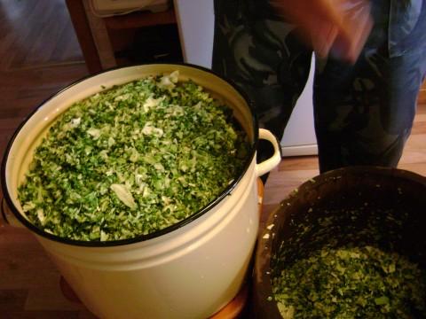 зеленые листья капусты заготовка на зиму