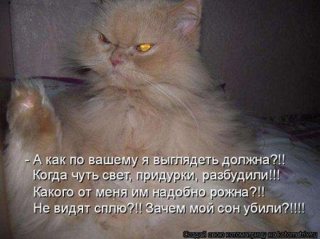 ...котомашки в ПервыйВесенныйДень...)