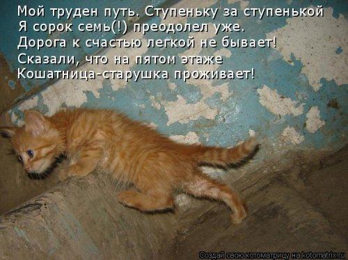 Отличная котоматрица для поднятия настроения (40 фото)