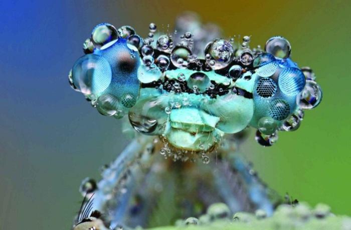 Макросъёмка насекомых во время дождя. Фотограф: Ондрей Пакан (Ondrej Pakan).