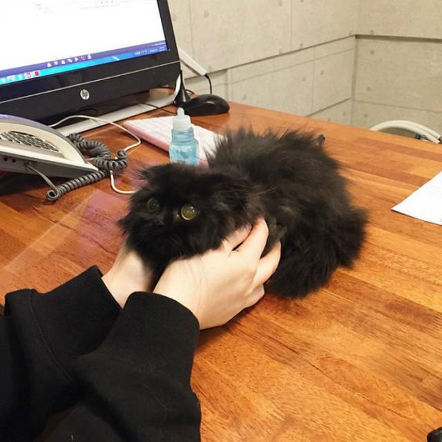 Котик Гимо, который всегда в шоке Гимо, животные, котик