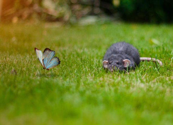 мышка и бабочка