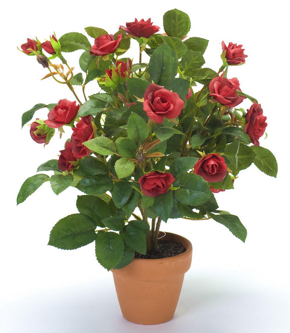Домашние цветы подарок женщине