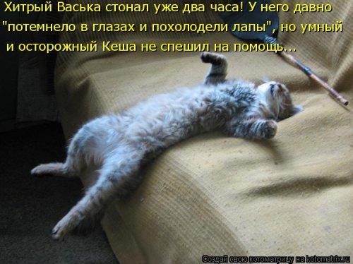 Новая котоматрица (36 фото)