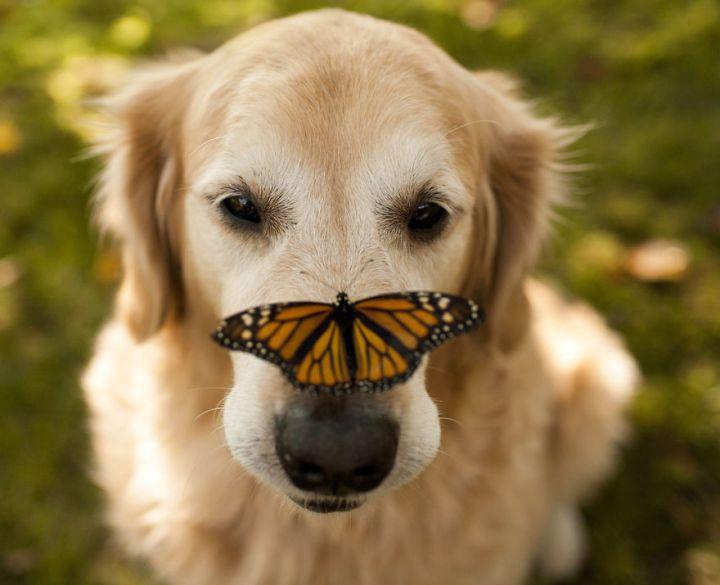 собака и бабочка