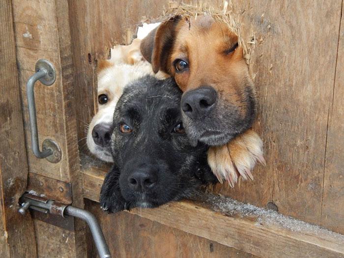 Домашняя охрана всегда на страже.