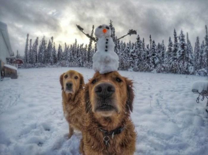 Зиме рады и дети и животные.