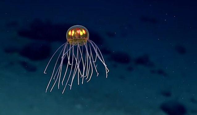 meduza-2.jpg
