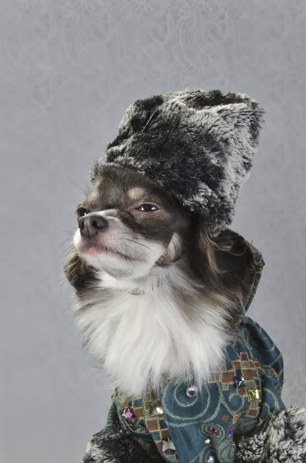 «Dog Vogue» —