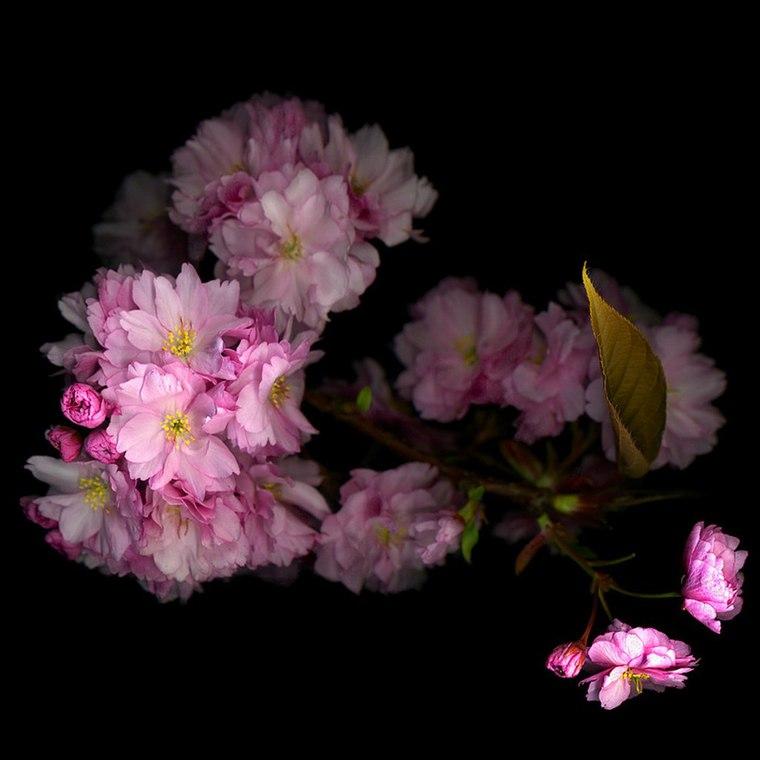 ИЗУМИТЕЛЬНЫЕ ФОТО: http://subscribe.ru/group/dlya-druzej/8532429/