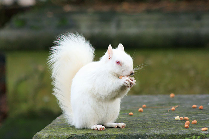 Squirrel Albino Blindness, animal world, creatures of our planet, facts