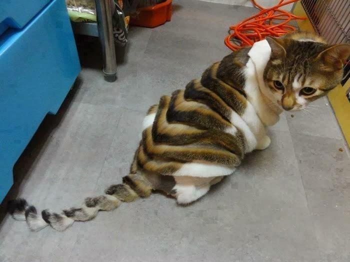 Модельные стрижки для кошек