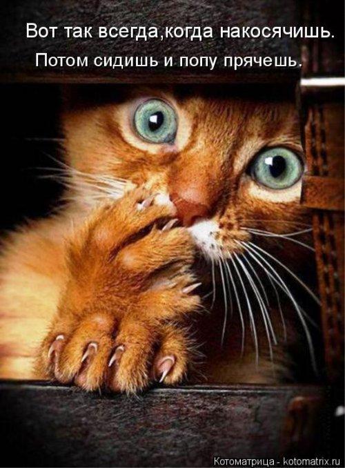Новая котоматрица на Бугаге (36 фото)