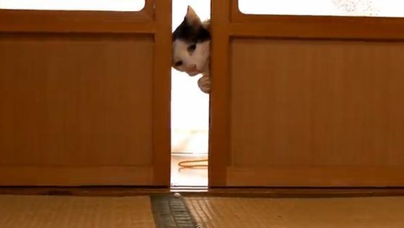 11 вещей, которые каждый кошатник должен сделать со своим котом животные, юмор
