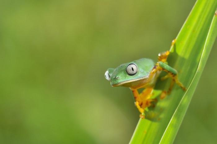 Лягушка в естественной среде. Фотограф: Патрик Риччи (Christian Patrick Ricci).