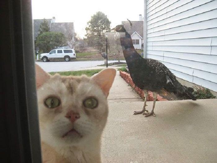 Впустите, я боюсь эту страшную птицу.