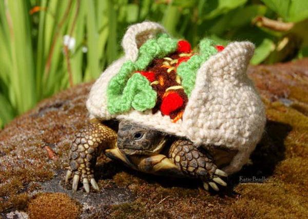 Оригинальные костюмы для черепах.