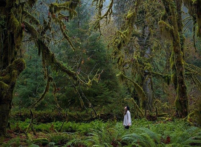 Национальный парк США, расположенный на северо-западе штата Вашингтон.