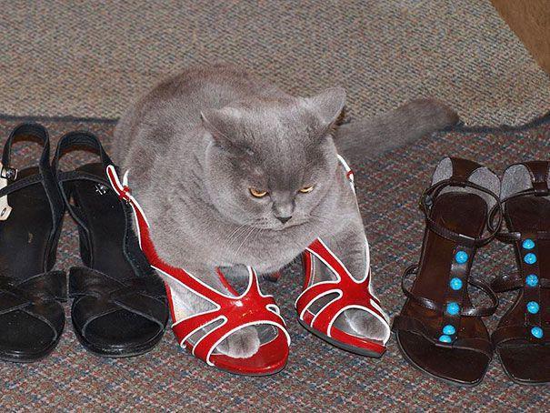 Обувь для кота