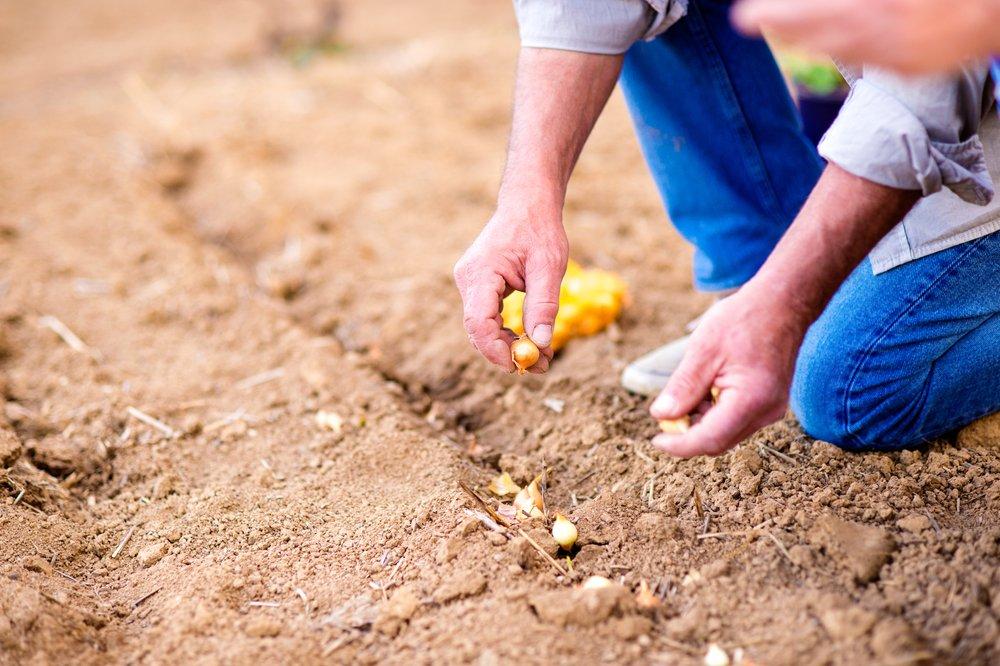 Семена клевера расход на сотку
