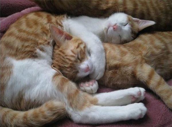 Киса спит она устала животные, прикол