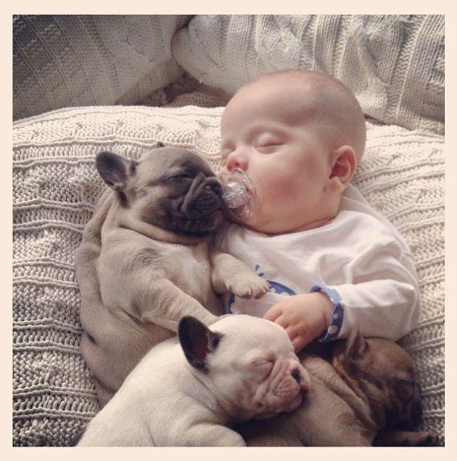 Малыш и щенки (11 фото)