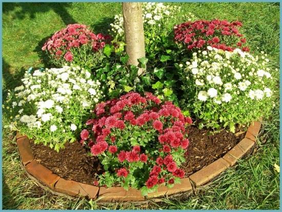место для посадки хризантемы