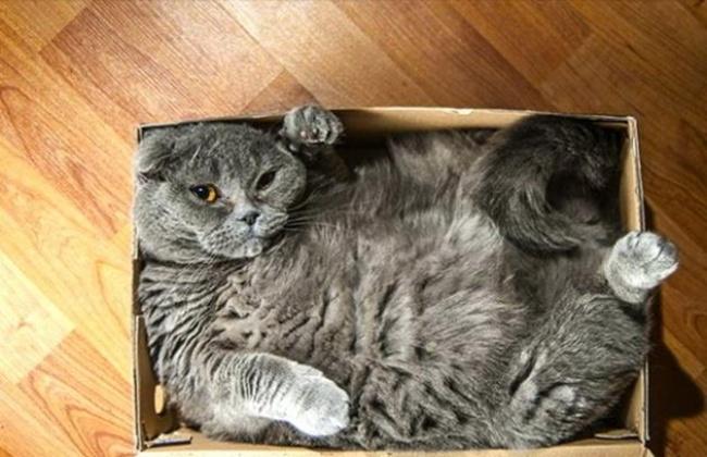 Кошки в коробке