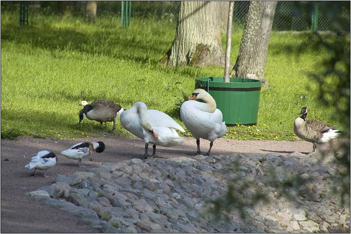 Петергоф. Птичий двор