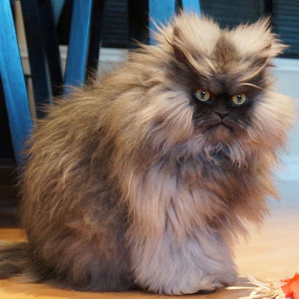 most-popular-cats-colonel-meow-3__605