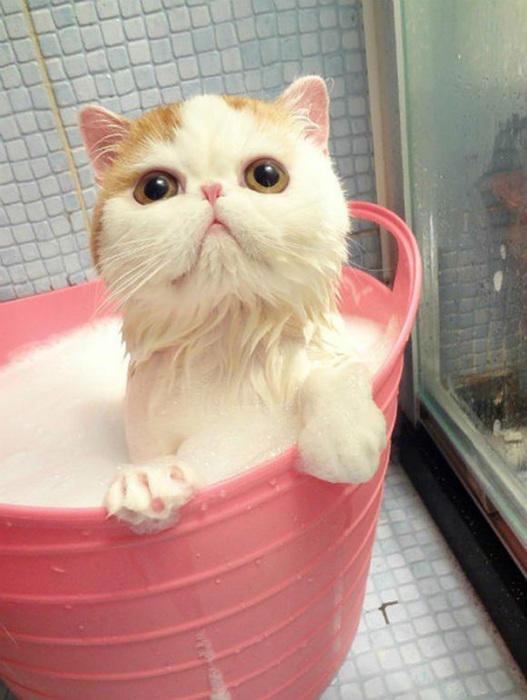 Ой, первый раз очень страшно купаться...