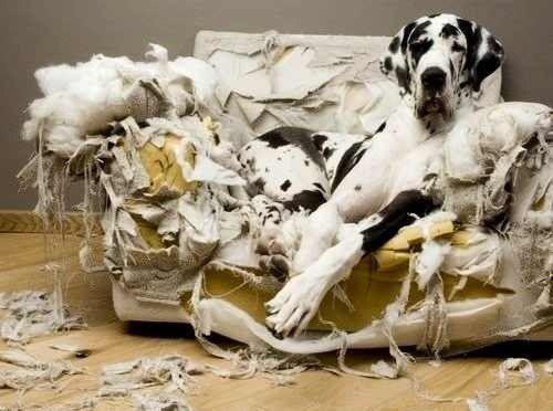 Как сделать чтобы собака не грызла