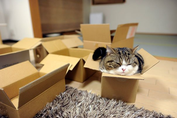most-popular-cats-maru-41