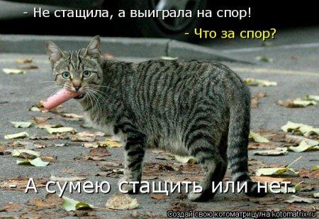 Забавные животные в котоматрицах