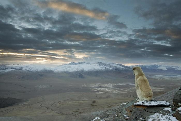 Самая высокая и мощная горная система на всем земном шаре, находится в Азии (Индия, Непал, Китай, Пакистан, Бутан), между Тибетским нагорьем и Индо-Гангской равниной.