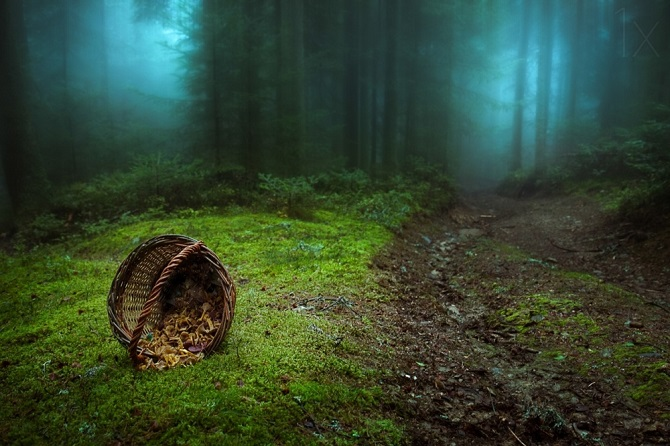 15 мистических лесов, в которых хочется заблудиться