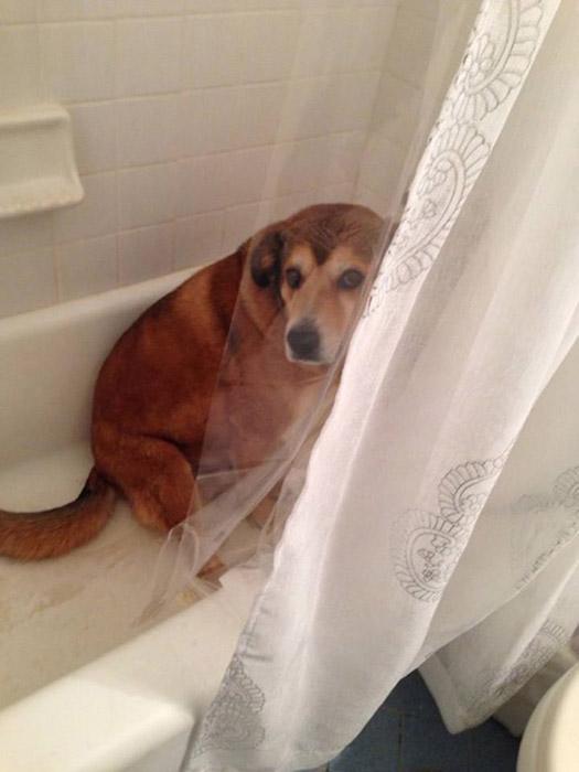 О, а я тут душ принимаю...