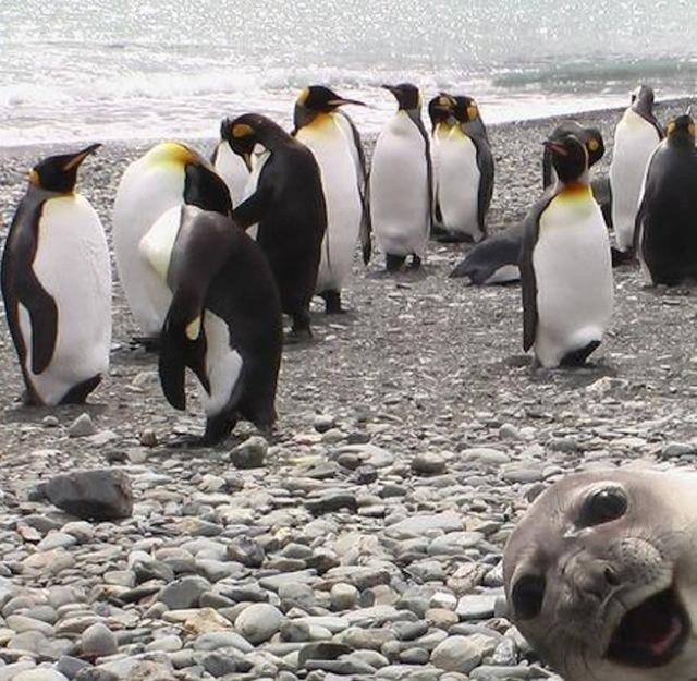 Это самые фотогеничные создания в мире: 20 снимков, несущих сплошной позитив.