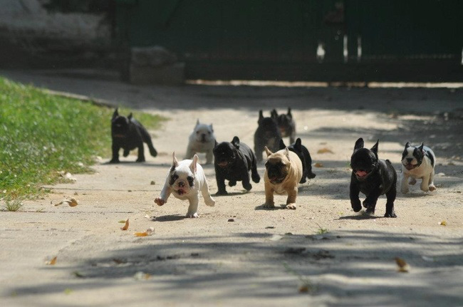 забавные щенки