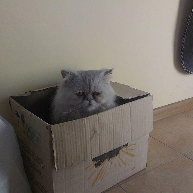 Посмотрите на этого бедолагу. Ведь он забрался в коробку, должен быть безмерно счастлив от этого, но нет. коты, прикол, юмор