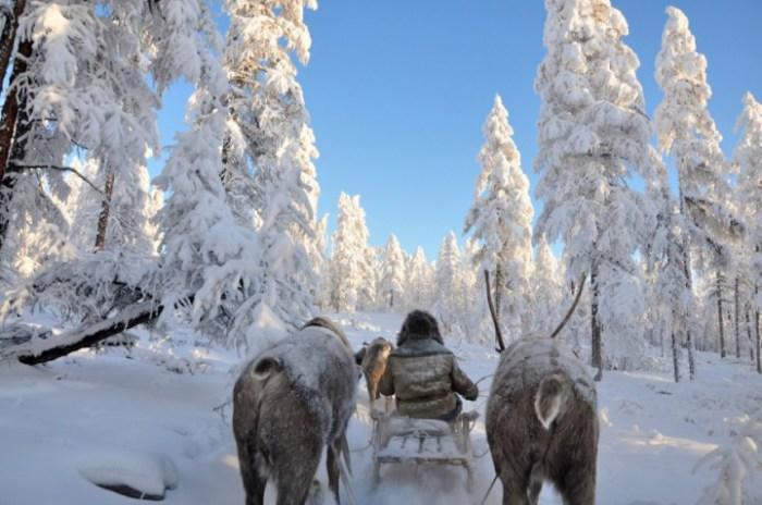 Только зимой можно прокатиться на санях.