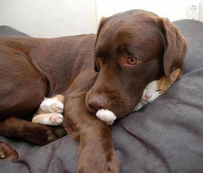 Какой такой кот? Не, не видел.