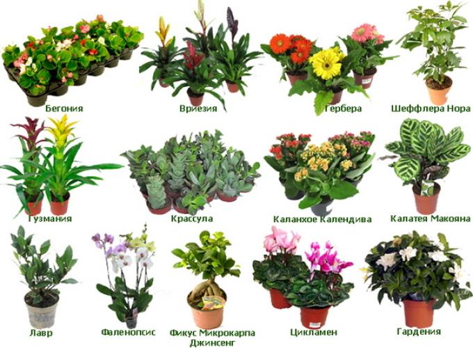 Все в мире домашние цветы