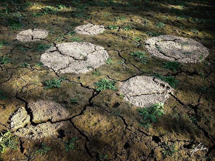 Сухая и мокрая земля.