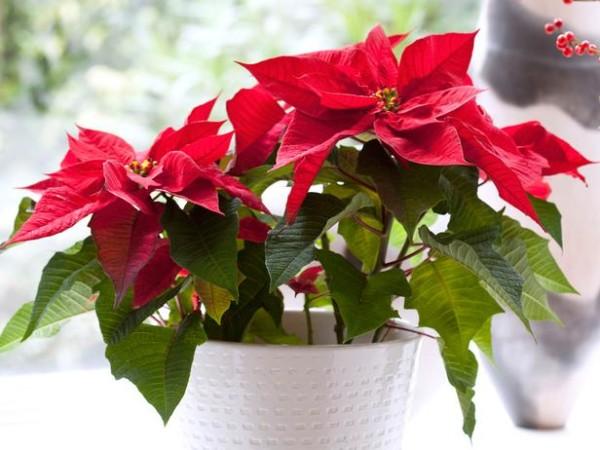 Комнатный цветы фото и названия цветущие весь год